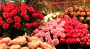 Продажа цветов оптом